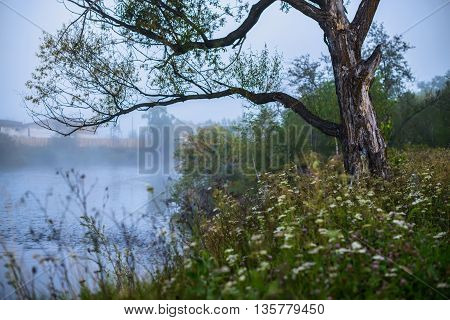 Trees in a fog on a background of the river in summer morning