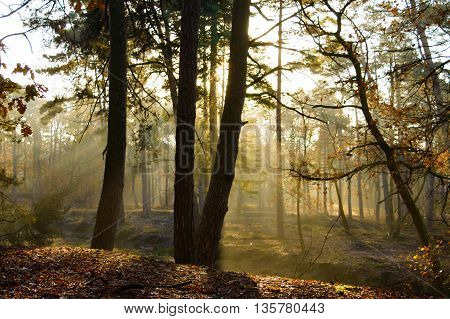 Leaf covered forest floor with beautiful yellow sunlight coming through various sized trees