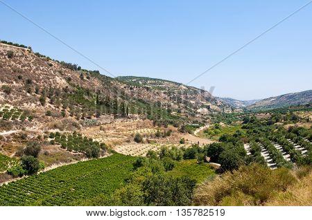 Cretan rural landscape with olive trees. Crete island Greece.