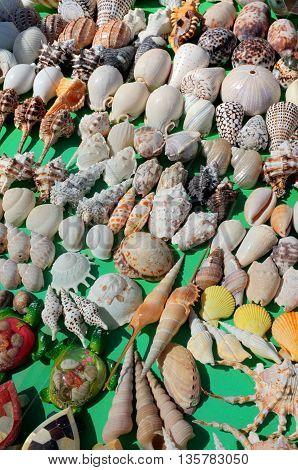 BALI INDONESIA - JUNE 23: Polished sea shells for sale on June 23 2016 at Canggu Beach in Bali Indonesia.