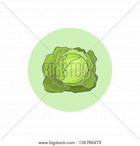 Icon white cabbage, icon vegetable, garden plants
