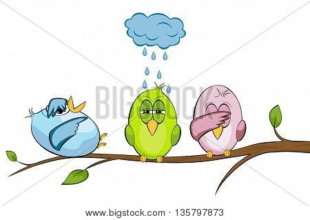 three funny birds in summer against white background
