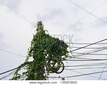 Ivy growing vegetation along power pole on unkempt cause harm.