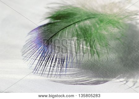 color bird feather lying on the white paper in sunlight