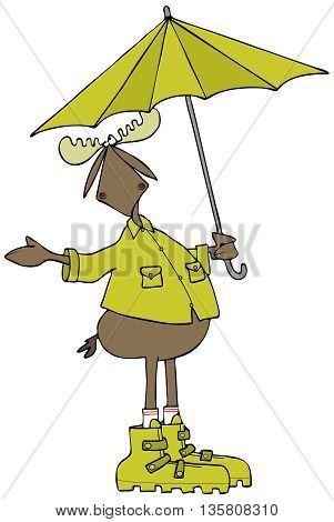 Illustration of a bull moose wearing rain gear and holding a matching umbrella while checking for precipitation..