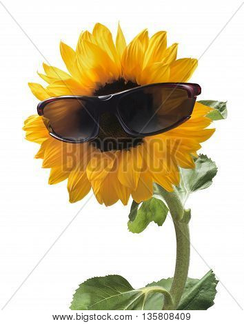 Sunflower in sun glasses holiday verical composition isolated on white background