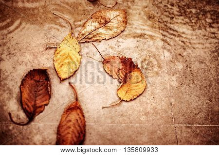 Fallen dry autumn leaves in the puddle, abstract natural background, traditional autumnal sadness and depression, season changes concept