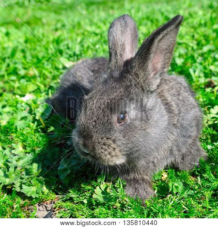 A little rabbit on green grass background
