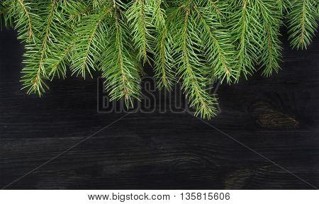 Christmas tree sprigs on dark background. Winter holidays background