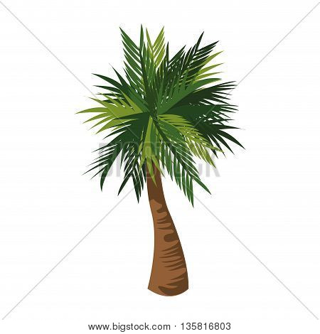 flat design detailed palm tree icon vector illustration