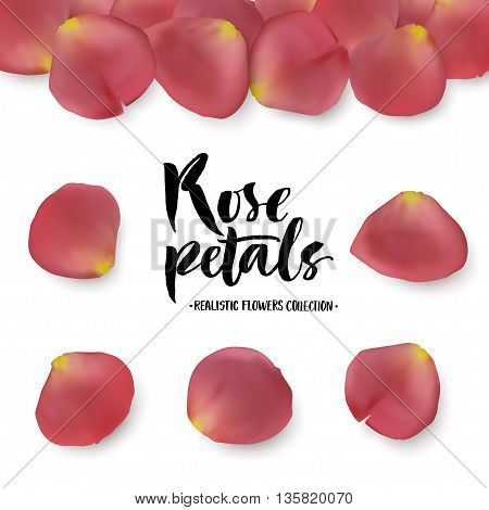 Realistic pink rose petals set. Six different objects editable shadow on white background.