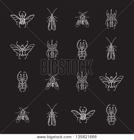 Vector seamless pattern with beetles on black background