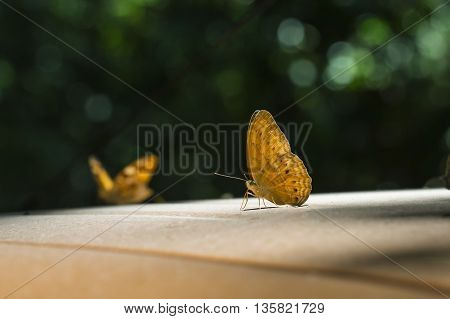 Butterfly perched on roof of car. Beautiful nature.