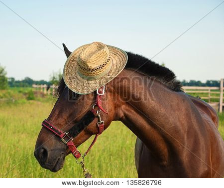 Funny Portrait of a horse wearing a cowboy hat on his head