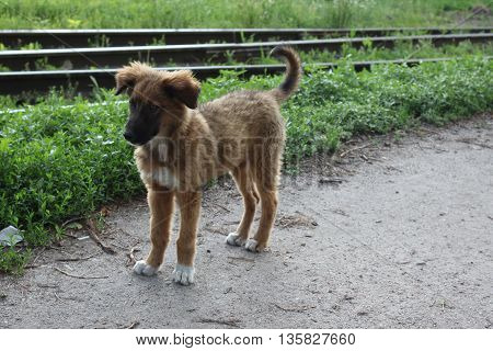Brown mongrel dog standing on the road