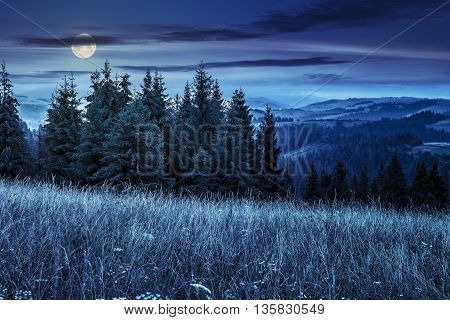 Large Meadow With Herbs,  Trees In Mountain Area At Night