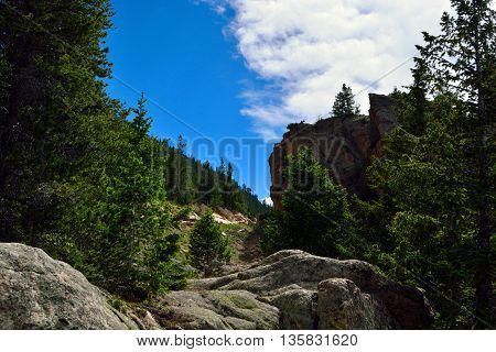 Mountain Pine Trees and Large Rocks on a Sunny Day