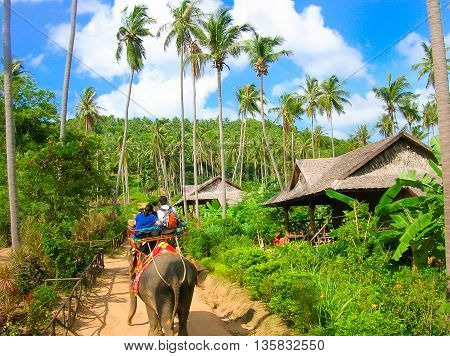 Tourists riding on elephants in the Thailand