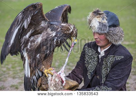 ISSYK KUL, KYRGYZSTAN - MAY 29, 2016: Golden eagle gets fed by his trainer.
