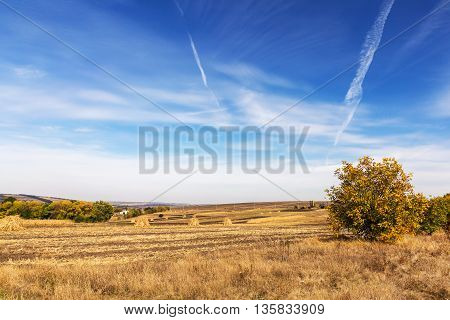 Autumn Landscape. Yellow Field And Blue Sky.