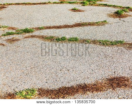 Dry Grass Through Asphalt. Abstract Background, Selective Focus