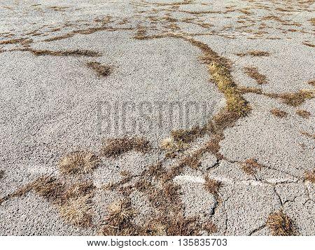 Dry Grass Through Asphalt. Abstract Background, Selective Focus