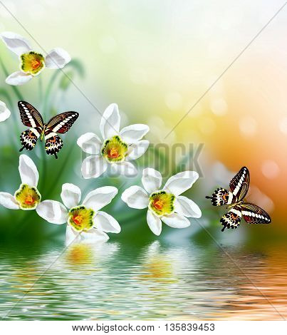 spring landscape. flowers snowdrops. Delicate spring flower. butterfly