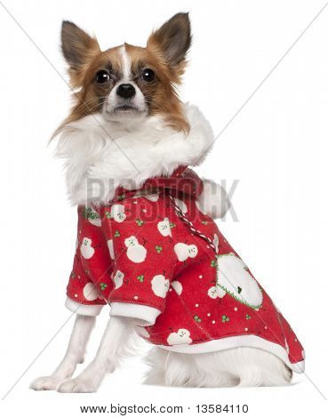 Chihuahua wearing winter outfit, 2 years old, sitting in front of white background