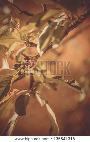 wedding rings hanging on apple tree's branch