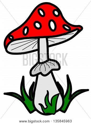 toadstool  , (Amanita muscaria) , red mushroom,