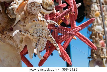 stelle marine, stella marina,conchiglie, estate, spiaggia, stelle marine rosse, conchiglie sospesi, vacanza al mare, liguria, cinque terre