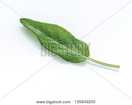 Close Up Of Single Fresh Sage Leaves Isolated On White Background . Alternative Medicine Fresh Salvi