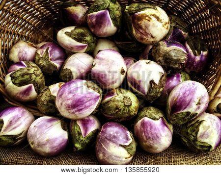 Rosa Bianca Eggplants Heirloom variety from the farmers market