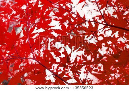 red leaves - abstract autumn nature background