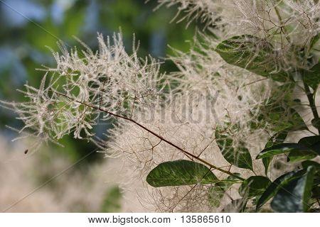 Plant macro