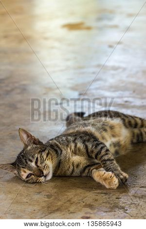 a lazy cat sleep on the floor