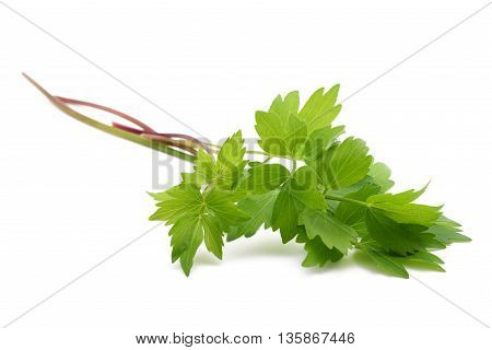 Fresh Lovage Branches