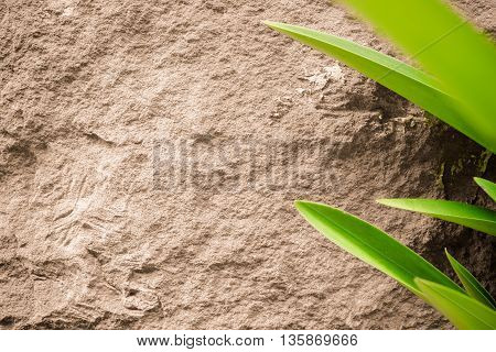 close up brown sand stone texture background