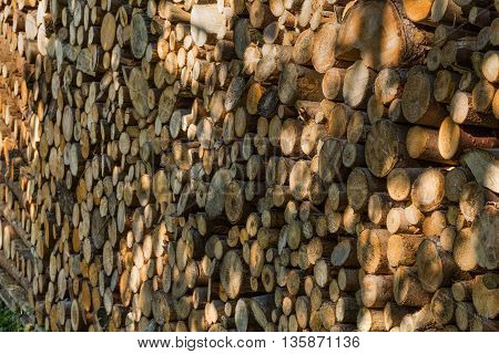 Firewood texture after the sawing wood in nature