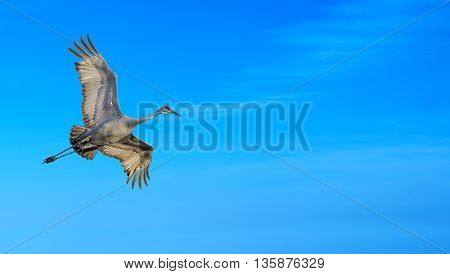 Beautiful tropical cranes against soft blue sky panoramic view