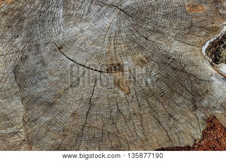 Log Of Pine