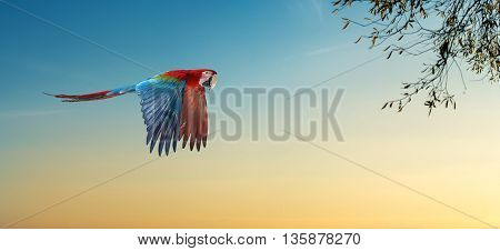 Parrot in nature habitat and eucalyptus tree