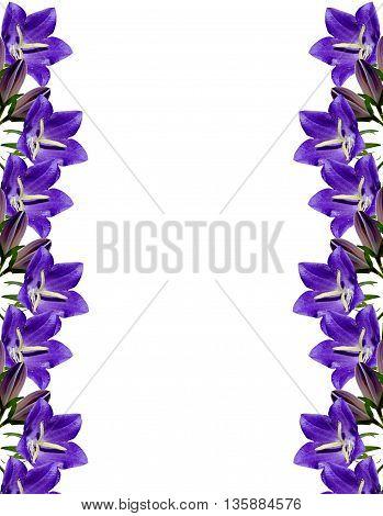 pattern of wild flowers bluebells. Beautiful blue flowers