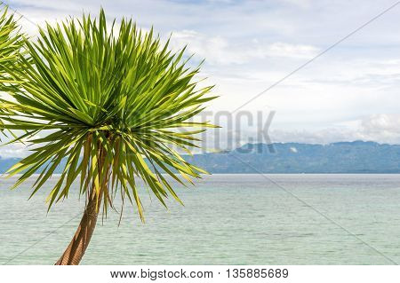 seaview with palm tree, island and cloudy sky at sunny day