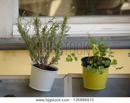 Balcony with different types of vegetables in flowerpots
