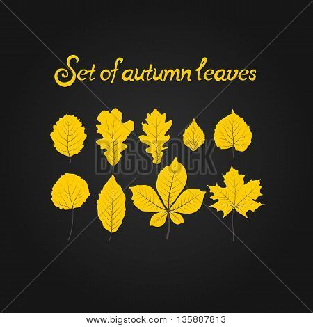 Hello autumn. Hand drawn set different colored autumn leaves. Sketch design elements in Doodle. Vector illustration.