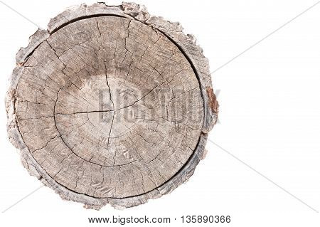 Wood texture of cut tree trunk on White background