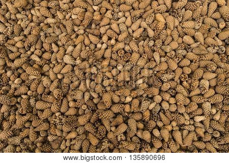 Many fir cones arranged as a structured background