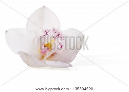 White orchid and blue flower isolated on a white background