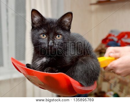 A little black kitten sitting on a child's toy shovel